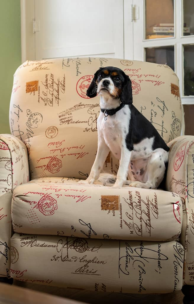 dog on chair in our pet friendly Tennessee bed and breakfast