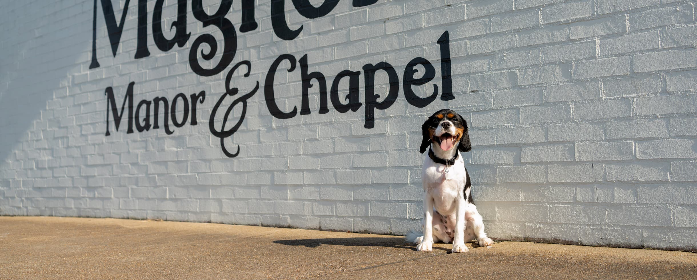Happy dog in front of our Pet Friendly West Tennessee Inn