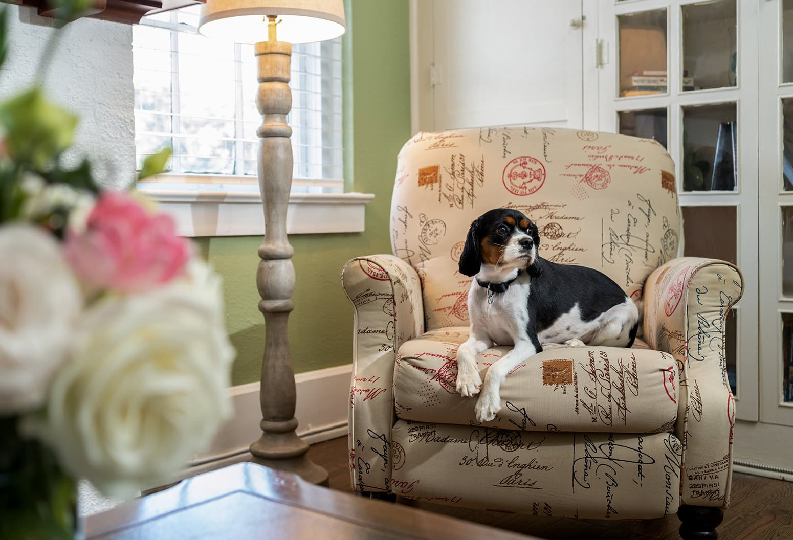 dog laying in a chair